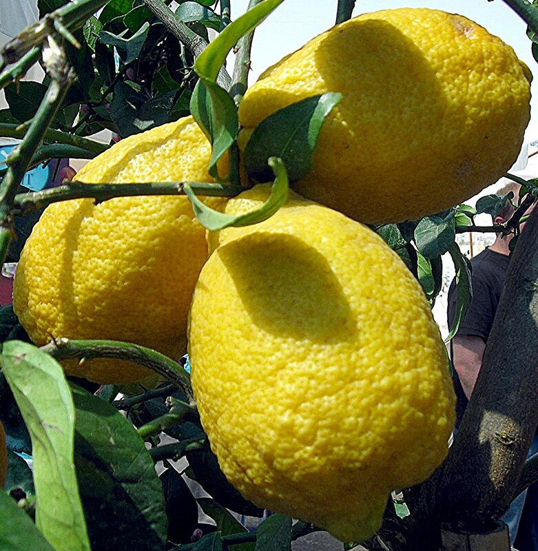 Лимонное трио