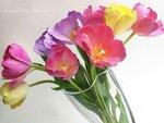 """Тюльпаны -  Ручная работа из """"холодного фарфора"""""""