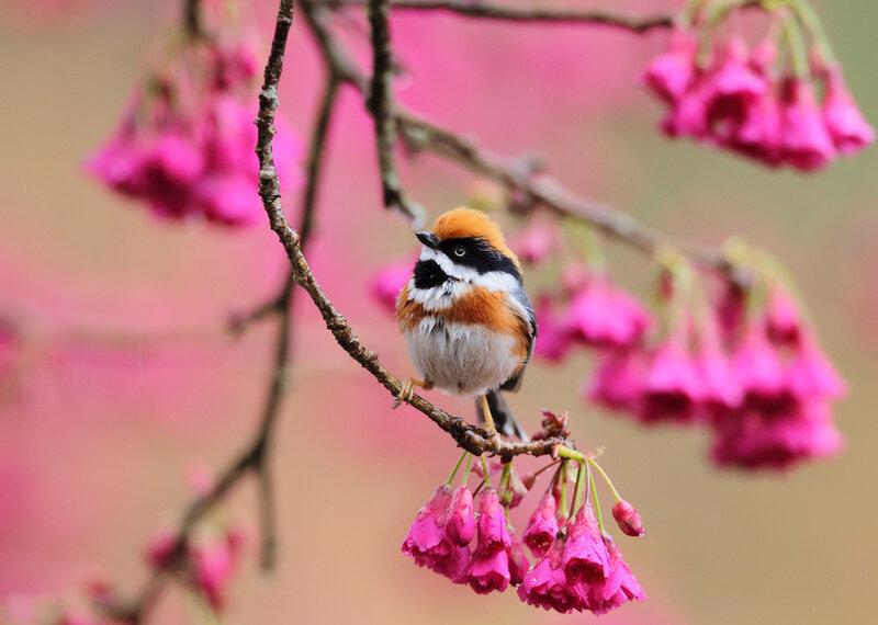 Живые открытки весна