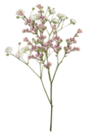 LaurieAnnHGD_Flowers4.png