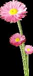 RR_PinkLemonade_Element (81).png