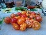 Помидор, томат сорт Isis Candy (айсис черри кенди)