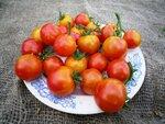 Помидор, томат сорт Isis Candy (айсис чери кенди)