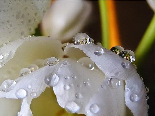 Роса, капли воды картинки (48 фото) видео