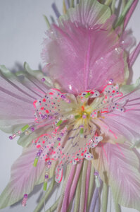 Орхидеи       - Страница 2 0_77550_457bf273_M