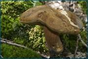 http://img-fotki.yandex.ru/get/6206/15842935.143/0_d09ee_ea70ee54_orig.jpg