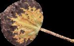 JenU_Leaf4.png