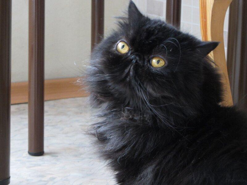 вездеССущий кот