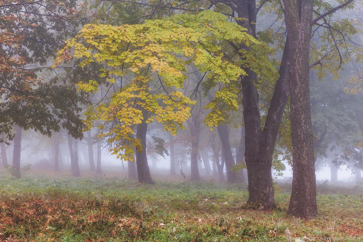 Картинки по запросу картинки туманной осени