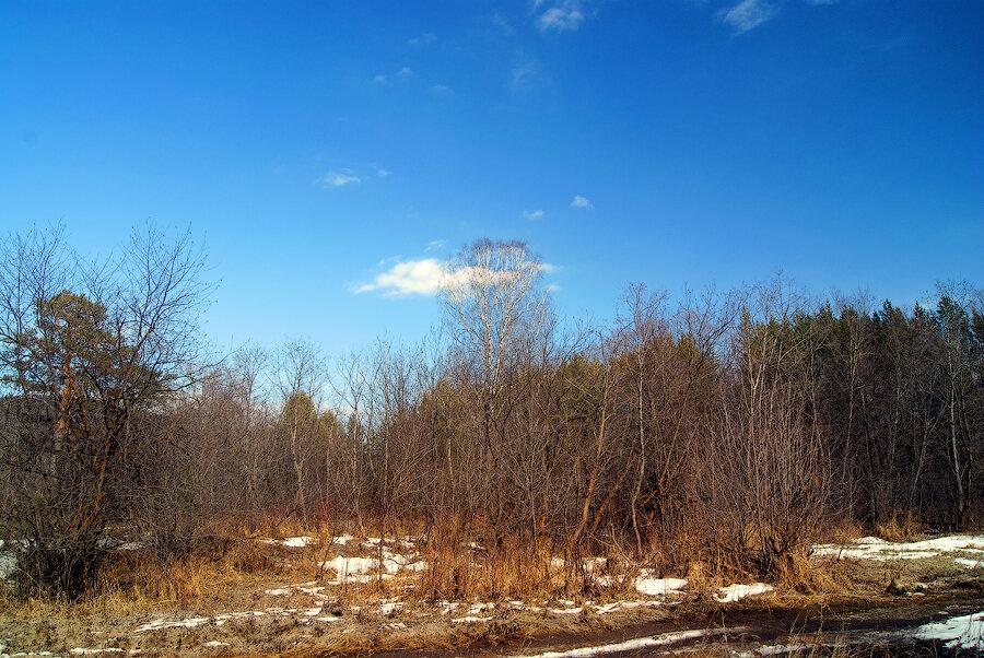Живая природа и фотографии весны