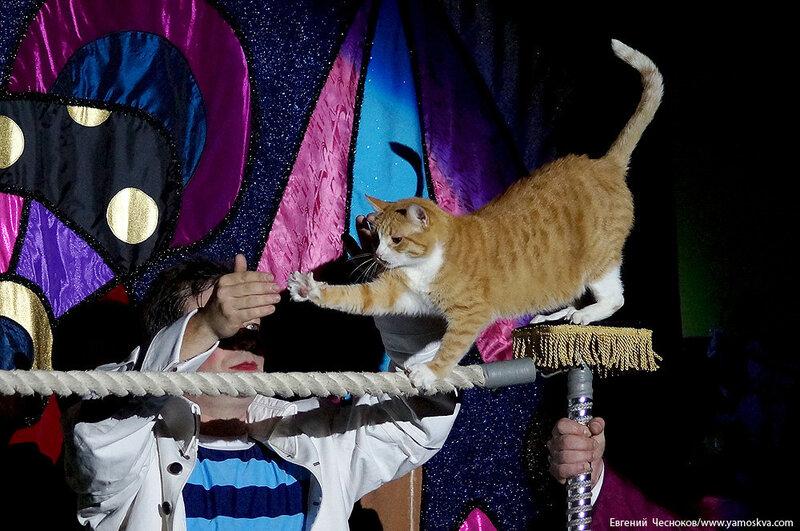 Осень. Театр кошек. ДИНАСТИЯ. 15.10.15.46..jpg