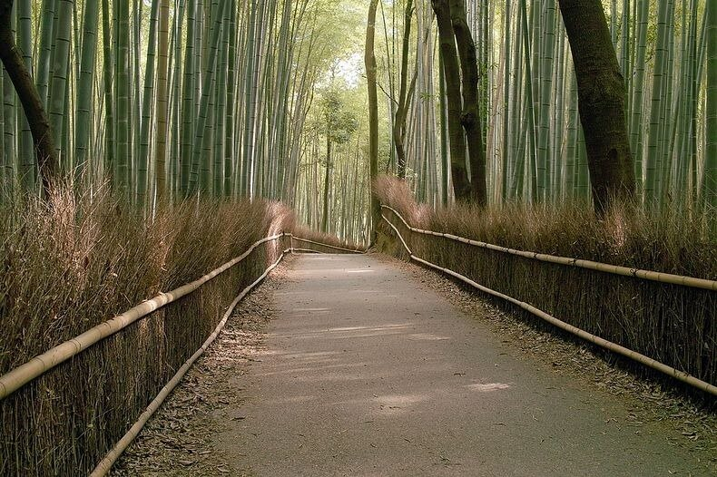 бамбуковая роща фото