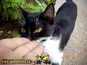 кошка Варя