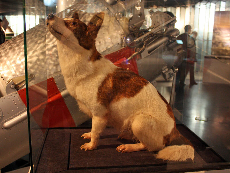собак белки и стрелки