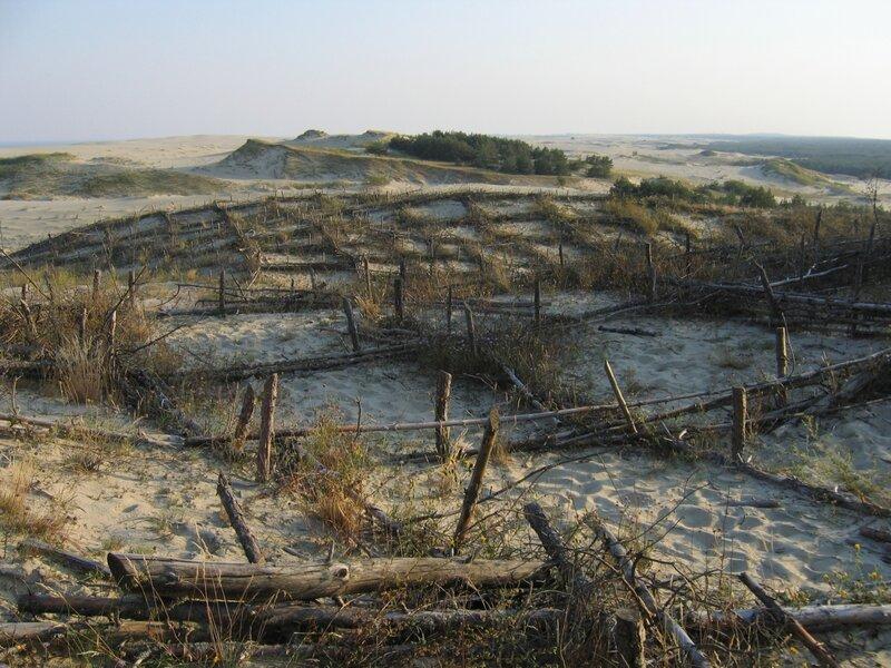 Закрепленные участки дюн на Куршской косе, фашины