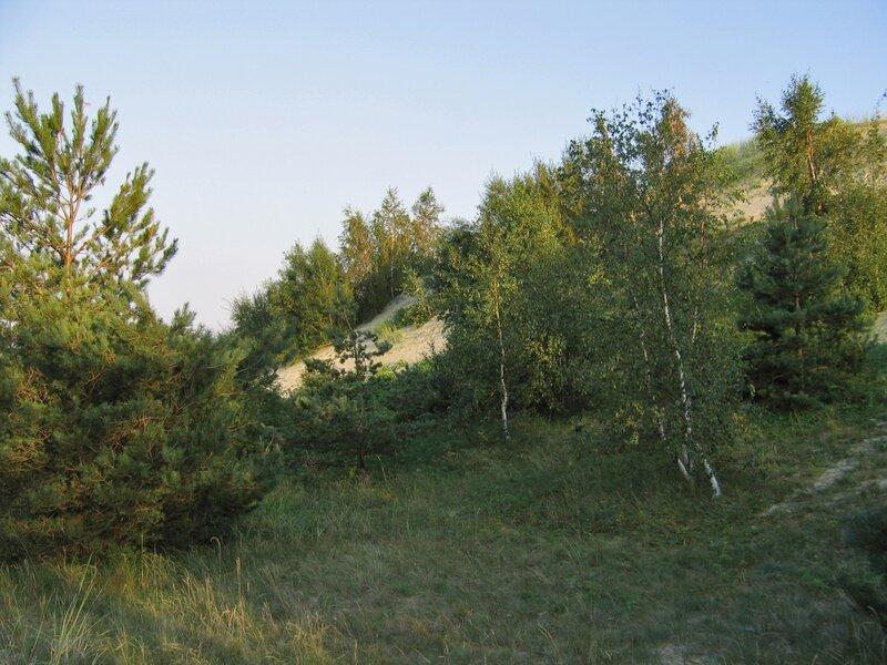 Пейзаж Куршской косы