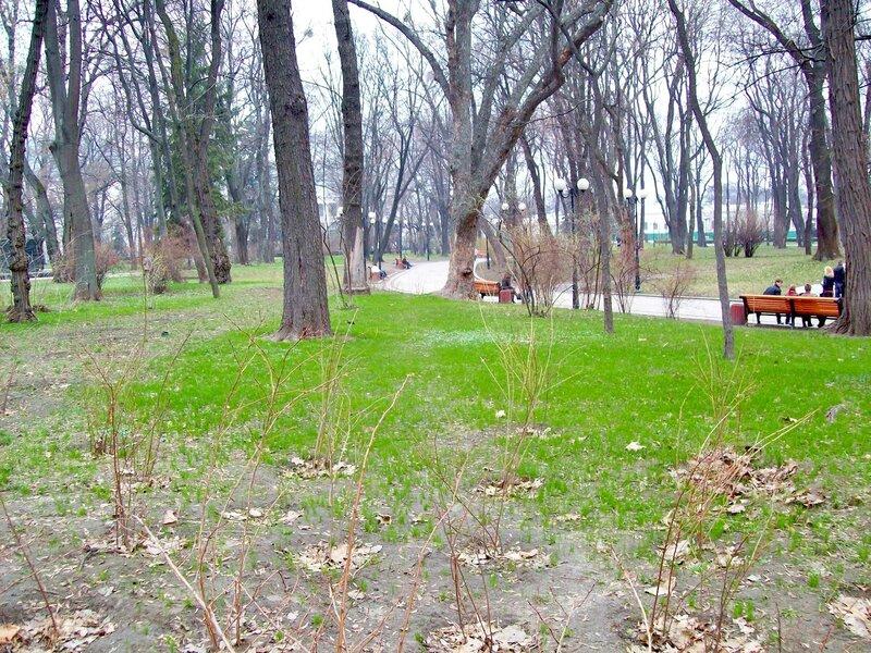 Весенняя трава в Мариинском парке