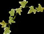 """Шикарный летний скрап-набор..""""Зеленая симфония"""" 0_752c4_1213d3b5_S"""