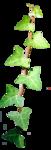 """Шикарный летний скрап-набор..""""Зеленая симфония"""" 0_752ca_bc229f72_S"""