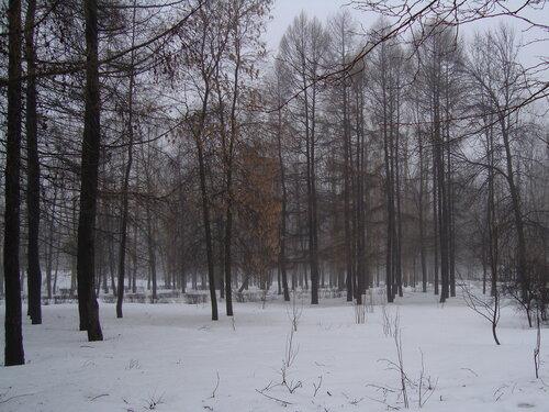 парк. туманное утро / DSC04029