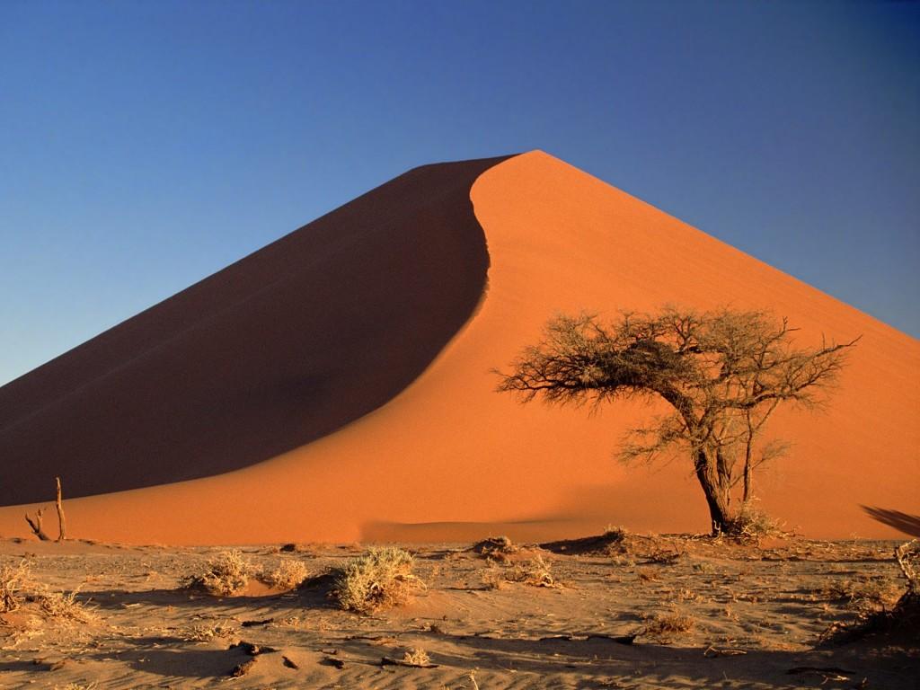 Деревья плато соссусфлей 15 фото