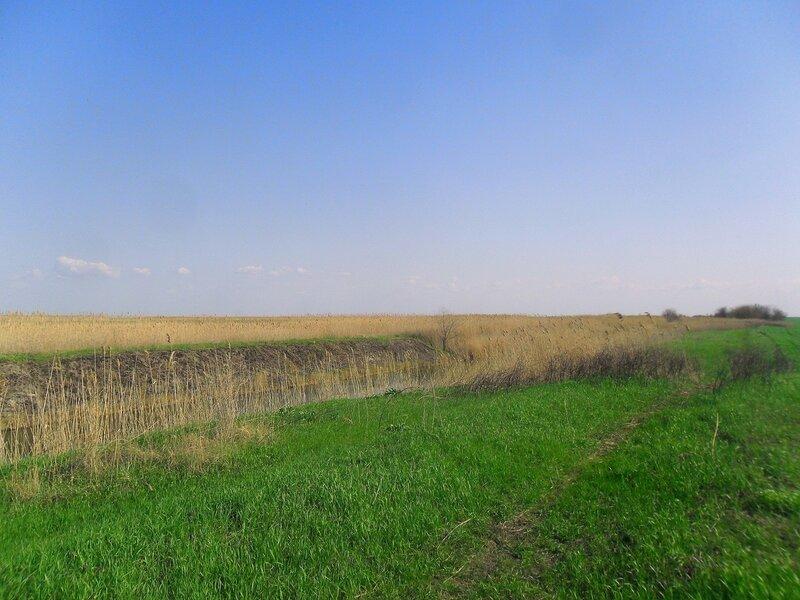 Старый камыш и свежая трава у канала ...SAM_6237.JPG
