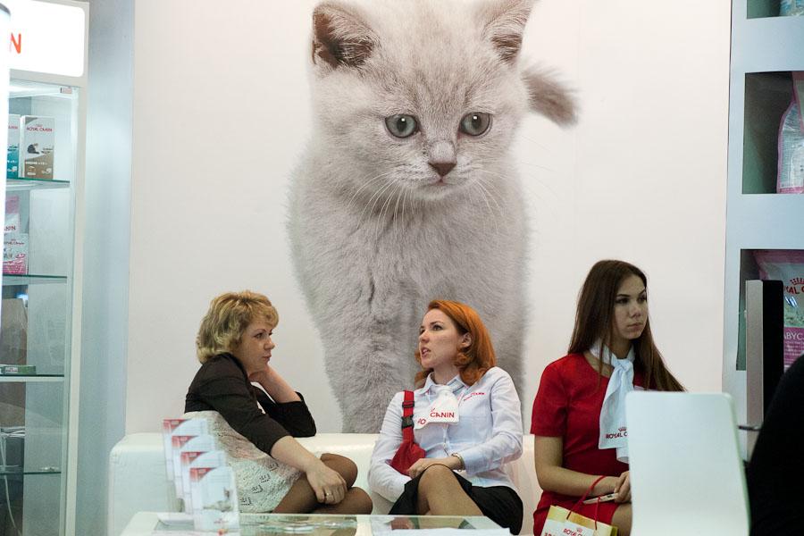 Выставка кошек в ВВЦ