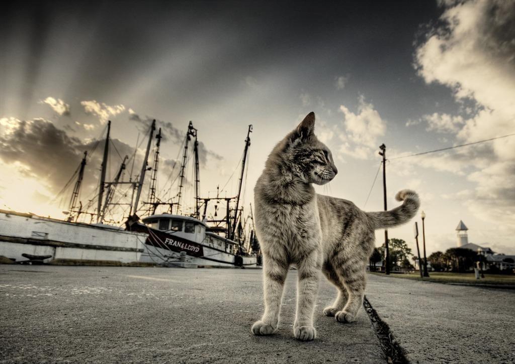 Красивое фото с котом - на причале