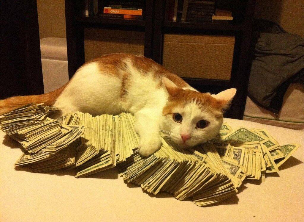 Фото кота с деньгами - подборка смешных фото
