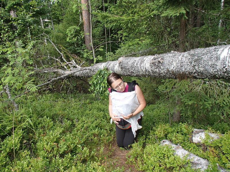 пролезаю с ребенком под упавшим деревом
