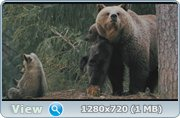 Россия - царство тигров, медведей и вулканов / Russland. Im Reich der Tiger, Baeren und Vulkane (2011) BDRip + HDRip