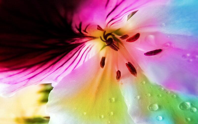 Спектр цветов картинки 4