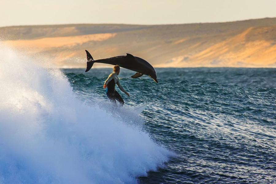 15. Серфинг с дельфином в Калбарри, Австралия.