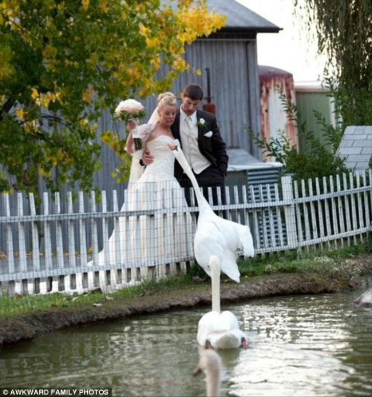 Кажется, лебедь решил отведать букет невесты.