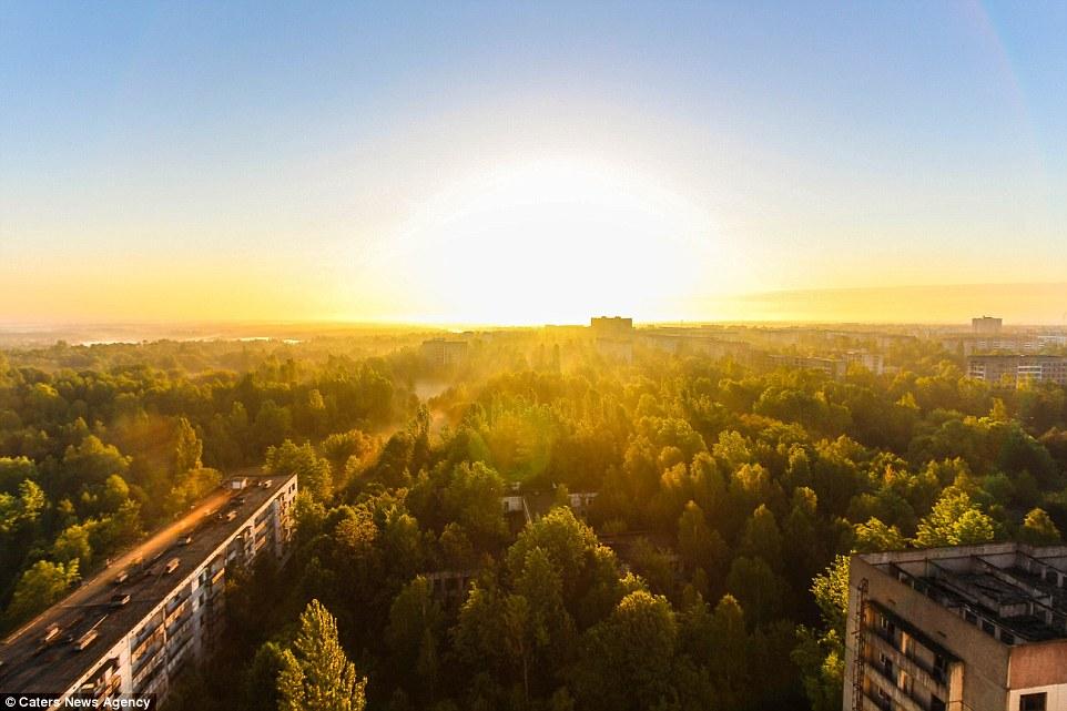 Пугающе красиво: солнце сияет над припятским лесом, который природа медленно восстанавливает в течен