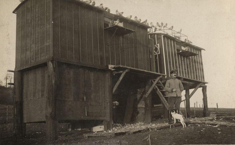 16. Немецкая голубятня на Западном фронте, 1916 год.