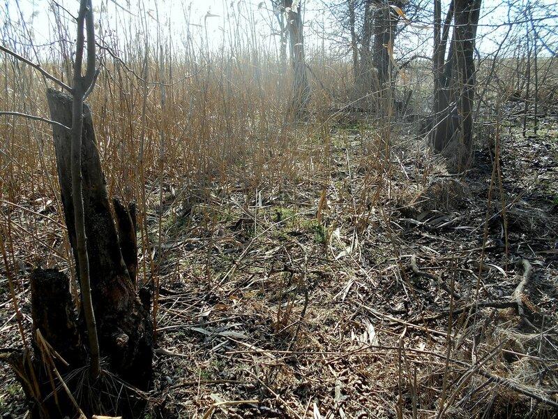 На Природе, март ... DSCN1346.JPG