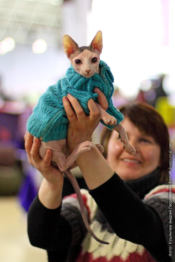 Канадский сфинкс. Питомник «Блеск Тулы» на выставке кошек
