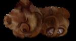 NLD Sleeping Bear sh.png