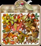 Autumn-восень