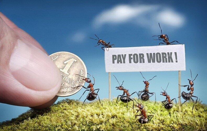 муравьиные сказки