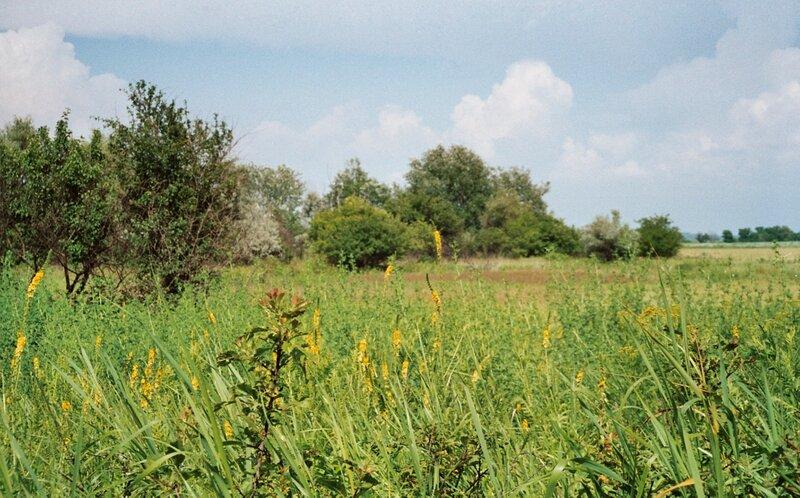Золотые горки, Цветы и травы
