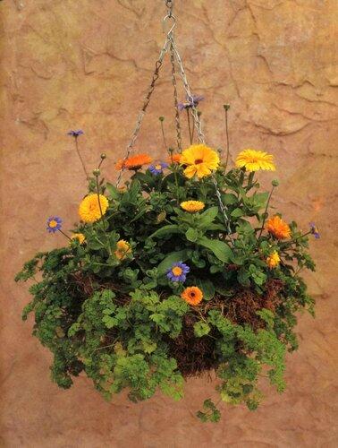 Как превратить балкон в цветущий сад