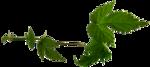 """Шикарный летний скрап-набор..""""Зеленая симфония"""" 0_752c5_241f1e08_S"""