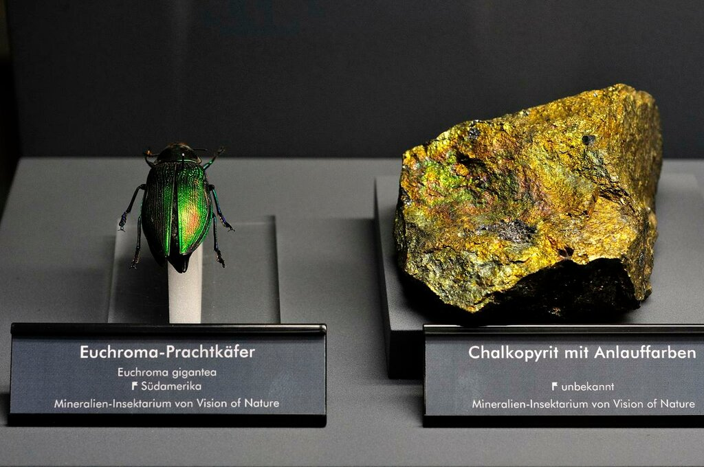 Chalkopyrite and beetle