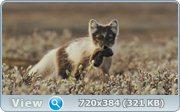 Россия - царство тигров, медведей и вулканов / Russland. Im Reich der Tiger, Baeren und Vulkane (2011) Blu-ray + BD Remux + BDRip 1080p / 720p + HDRip + AVC