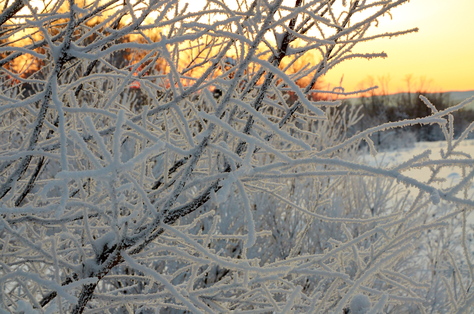 Мороз. Зимний закат