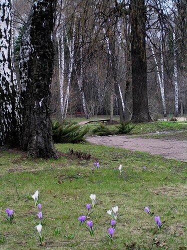 Сиреневый сад и Малый розарий открываются 1 мая