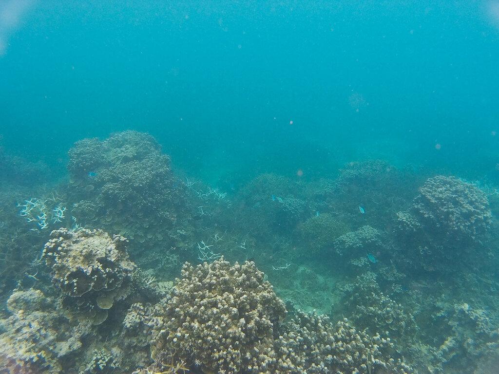 Подводный мир Самоа