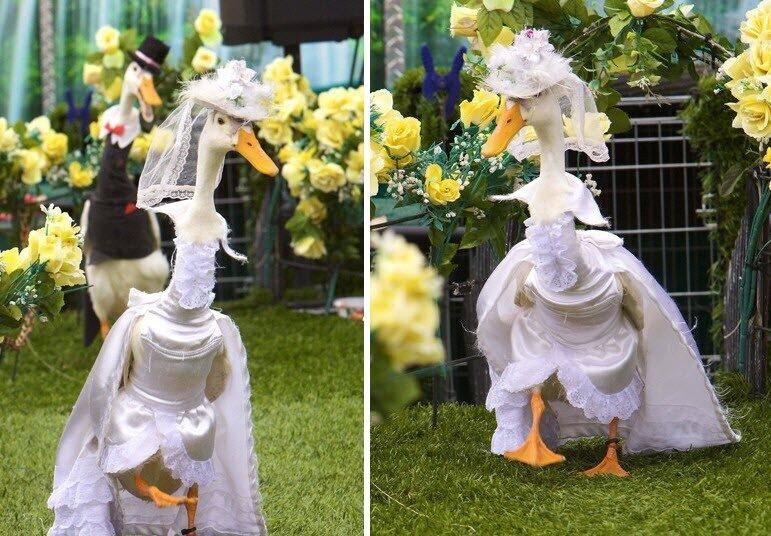 одетые утки